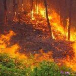 Chiêm bao thấy cháy rừng là mang đến điềm báo gì?
