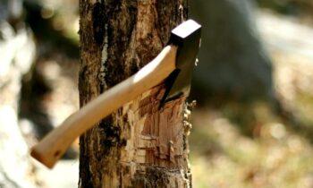 Giải mã giấc mơ thấy chặt cây – Nằm mơ thấy chặt cây đánh con gì?