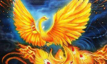 Ngủ mơ thấy phượng hoàng lửa là điềm gì? Đánh đề con gì may mắn?